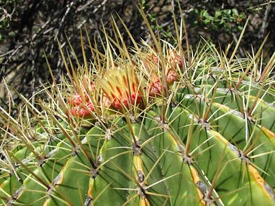 Tucson Botanical Gardens (24)
