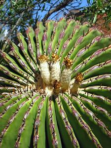 Tucson Botanical Gardens (31)