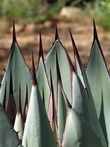 Tucson Botanical Gardens (21)