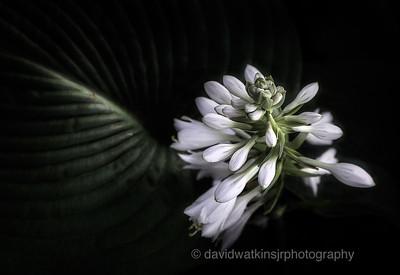 Elegans Flower Scape II