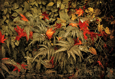 Fall Medley Antique
