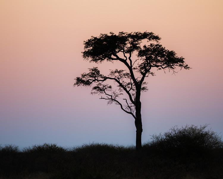 Kalahari Dusk