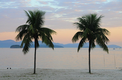 Two palms in Angra