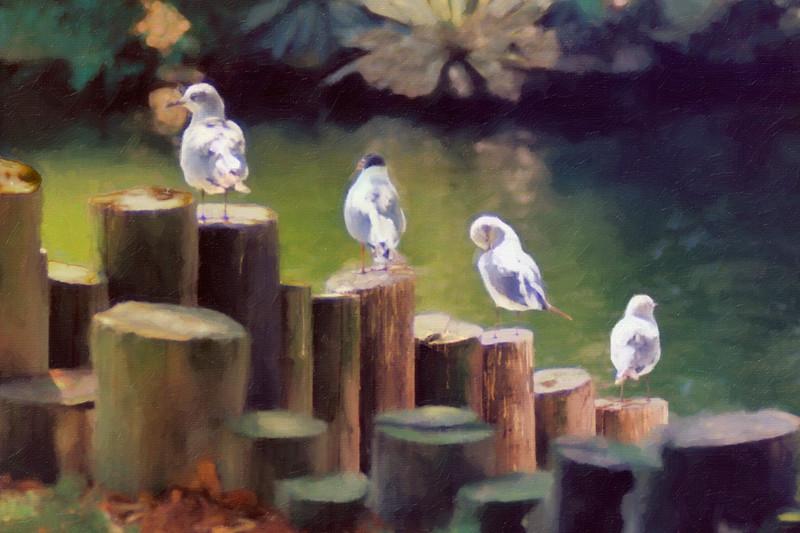 4birds 001
