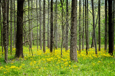 Spring in the Forest