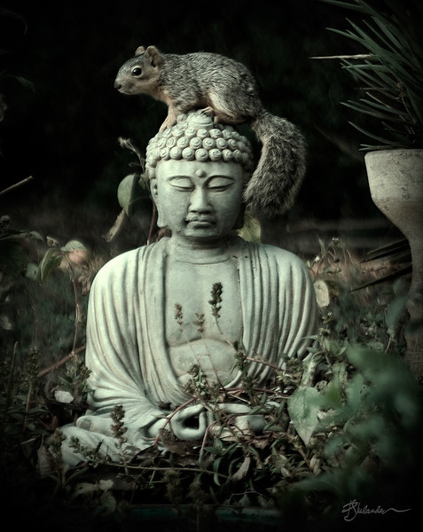 Buddha with Squirrel