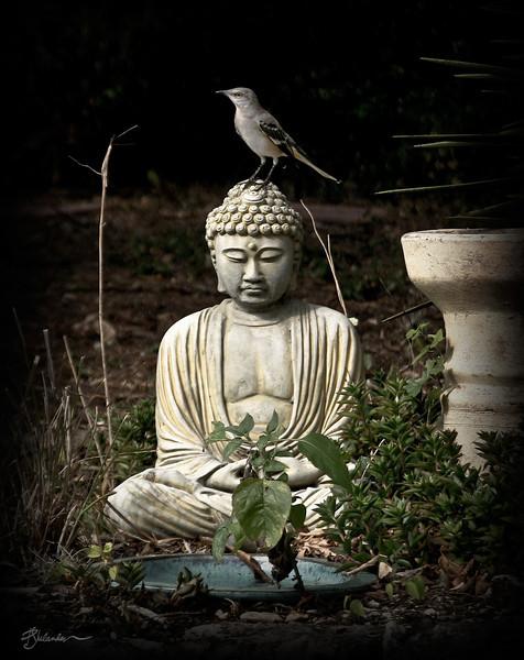 Buddha and Mockingbird