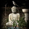 Buddha and Mockingbird