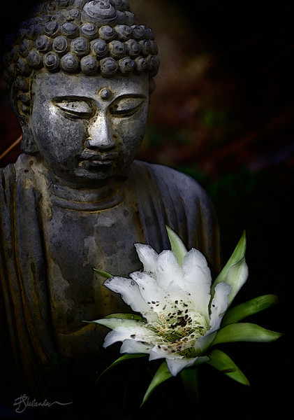 Buddha with Cactus Flower