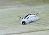 "<div class=""jaDesc""> <h4> Hickory Tussock Moth Caterpillar - Front View - September 28, 2014 </h4> <p> </p> </div>"