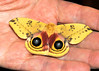 """<div class=""""jaDesc""""> <h4> IO Moth in Hand - June 6, 2014</h4> <p> Lynn found this IO Moth in our barn aisle.  It was very cooperative about being picked up for a photo.  Those 2 """"eyes"""" are really neat.</p> </div>"""