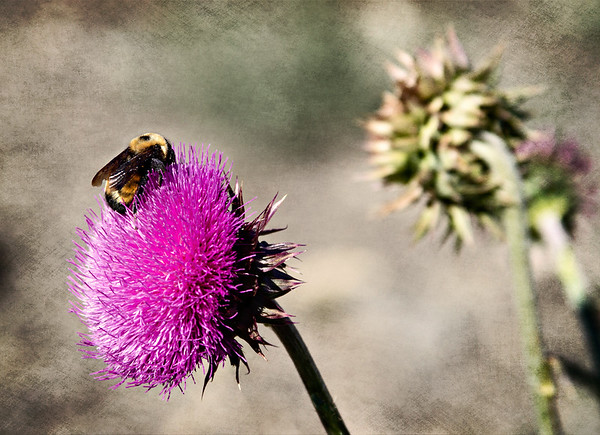 Abstract of the bee