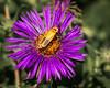 Yellow Bug 01 (jpeg) website background-2