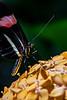 Butterfly FlowerPuff
