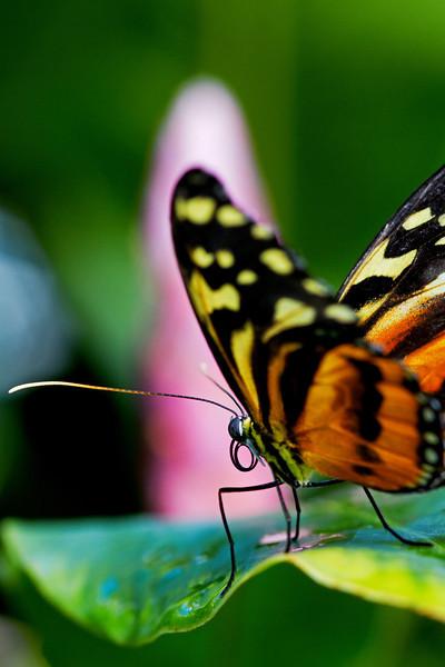 Butterfly Curosity