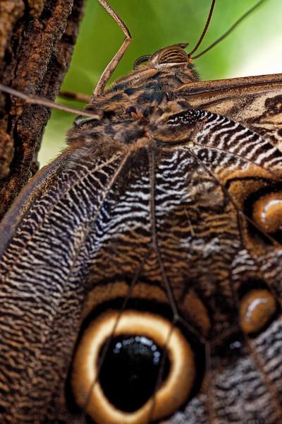 Butterfly Tree Hugger