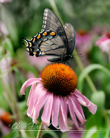 Butterfly_DSC3676-8x10