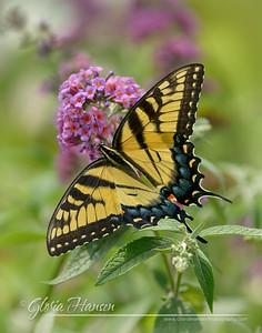 Butterfly_DSC2779-11x14