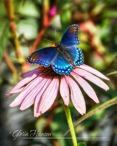 Butterfly_DSC3264-8x10