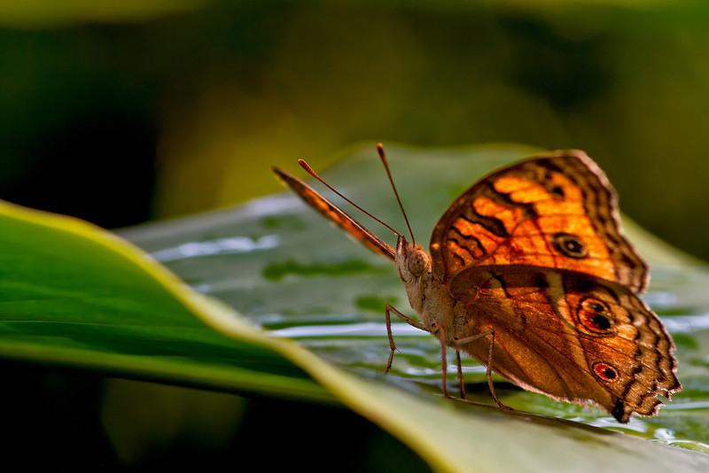 Butterfly Morning Stroll