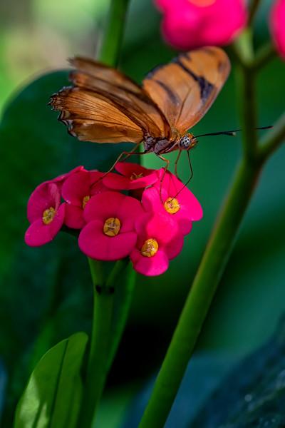 Butterfly Flower Lunch