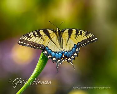 Butterfly_DSC2366-8x10