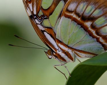 Butterfly World-7644