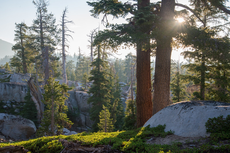 The diverse old growth subalpine forest of the Desolation Wilderness near Lake Tahoe.