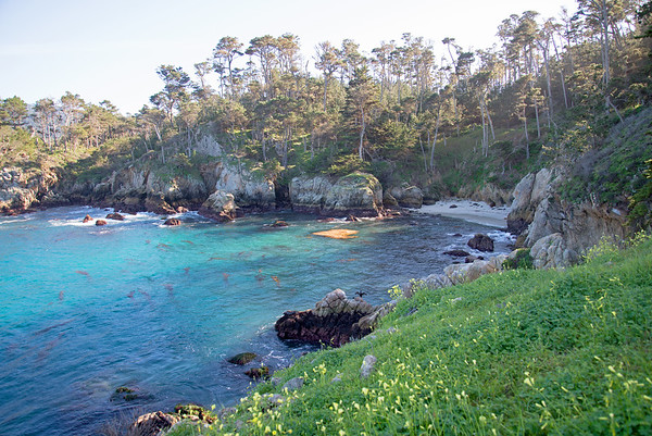 A coastal fairytale land on Point Lobos near Carmel, California.