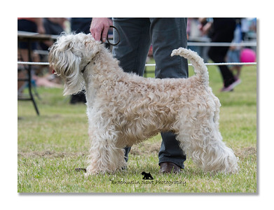 Open Dog - 1st & Reserve Best of Breed