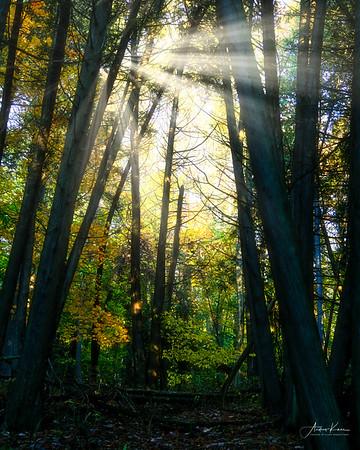 Sunny Woods 0161 8x10 LOGO
