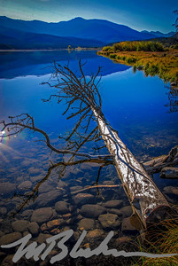 Fallen Tree on Clear Water of Shadow Mountain Reservoir, Colorado