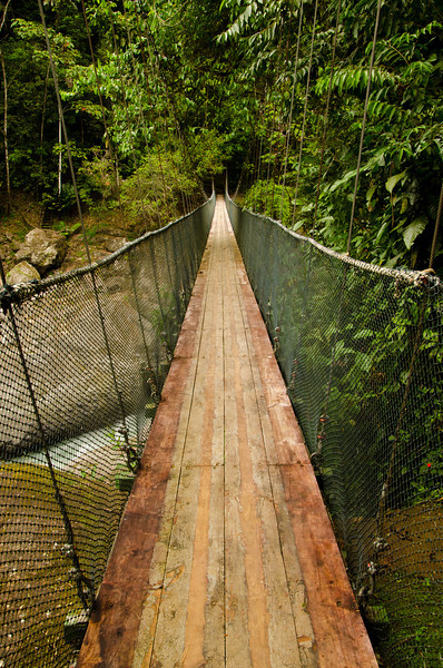 Rainforest Bridge