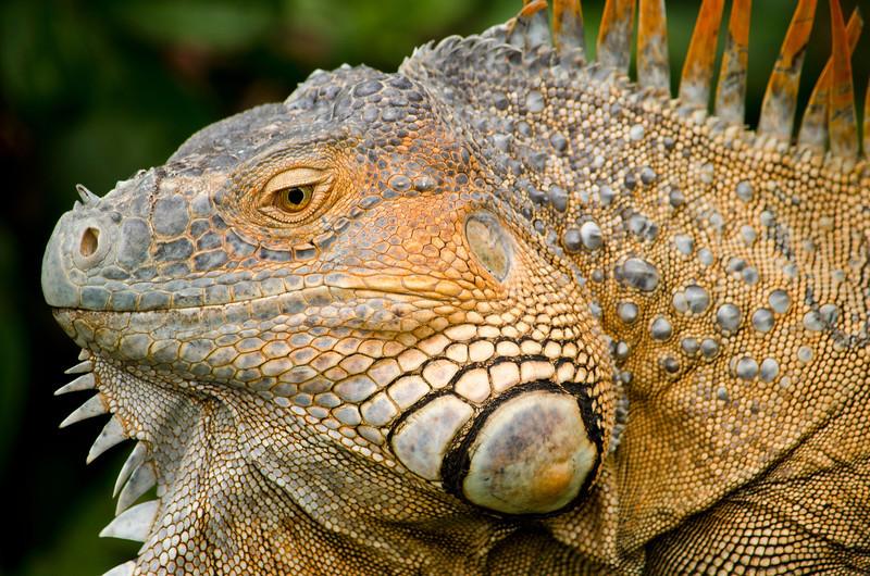 Costa Rican Dinosour
