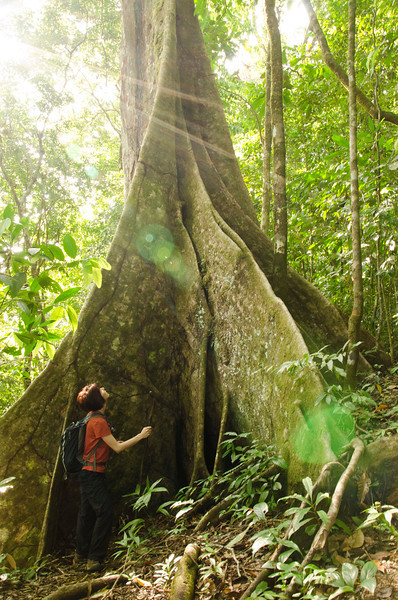 Jess shows scale for the immense roots of the Butress Tree