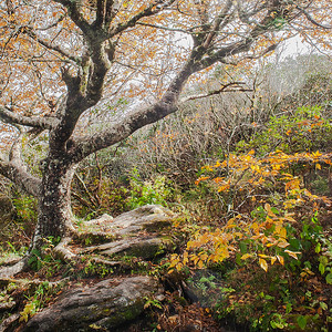 Gnarly Tree In Autumn