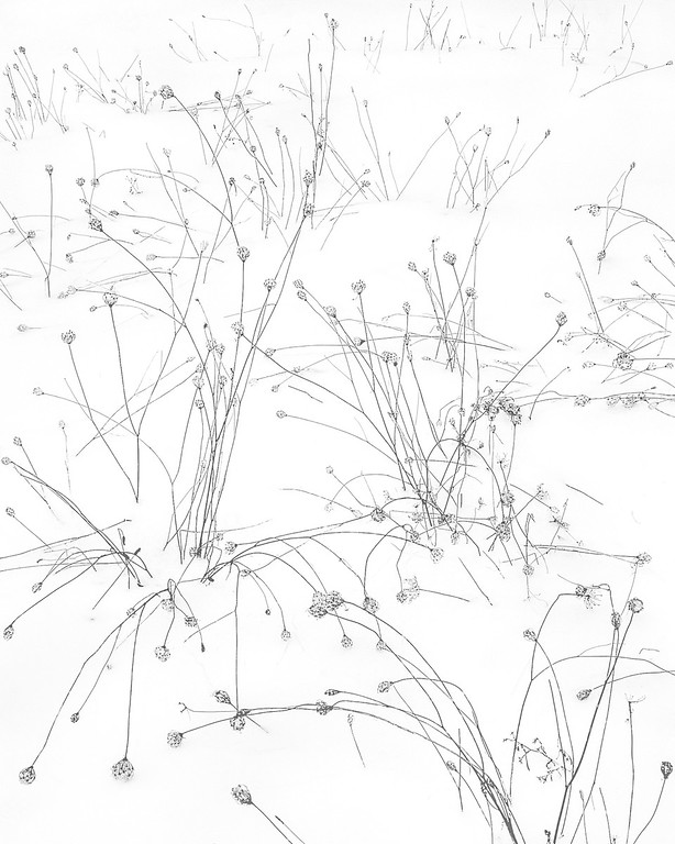 JJ Raia   - Queen Anne's Lace in Winter - 3rd Place