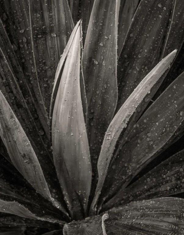 Michael Ligett  - Yucca Plant - Best in Show
