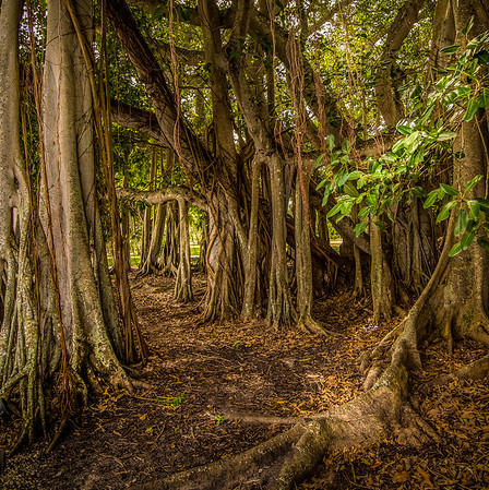 The Wooded Canopy
