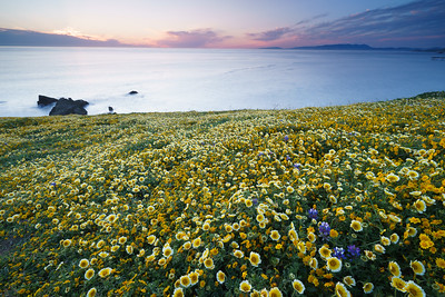 """Flower Blanket"" - Mori Point, Pacifica, CA"