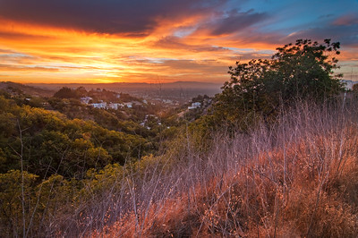"""Treepeople Sunset"" - Santa Monica Mountains, CA"
