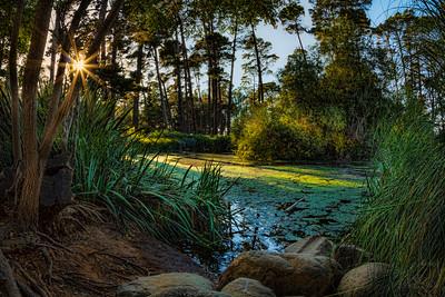 Waller Park Pond