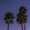 Moon amid Palm Trees.