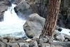 Ponderosa Pine trunk, adjacent to a intrusive igneous granite boulder - along the Roaring River Falls - Kings Canyon National Park - California