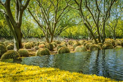 Mellow Yellow at Sunnylands - Rancho Mirage, California, USA