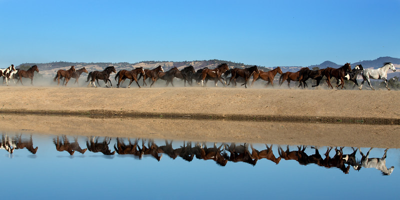 "Our first morning, all the cowboys and cowgirls ""arranged"" for this herd of horses to gallop right past this reflecting pond, so cool!"