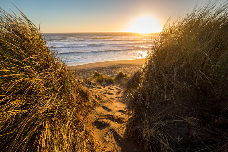 Coastal Dunes Sunset II