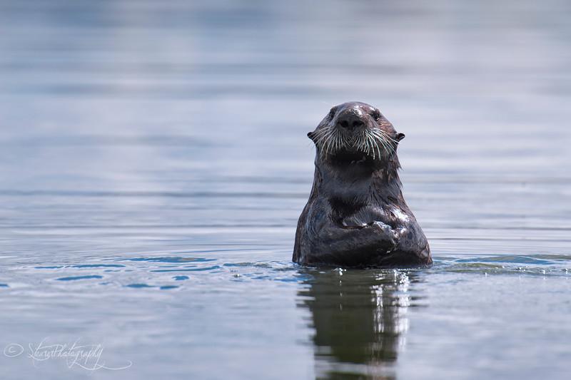 Curious - Elkhorn Slough, Monterey Bay, CA