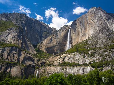 Pining For Yosemite