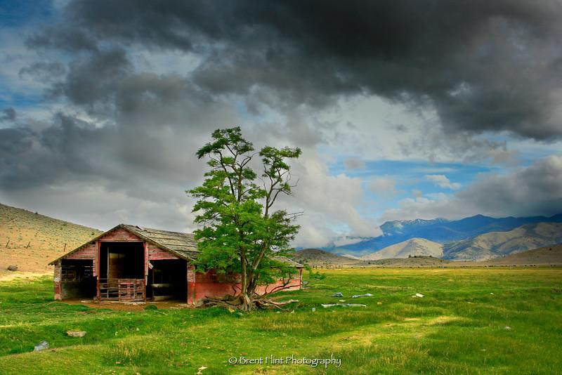 DF.2656 - old barn and tree, W. Louie Rd., Siskiyou County, CA.